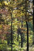 Italy, Piedmont, woods in fall