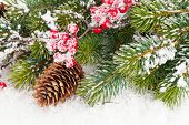 Christmas fir tree branch with holly berry over snow