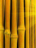 Cracks   Trunk   Tree   Bamboo