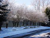 Essex Avon Lane Winter2