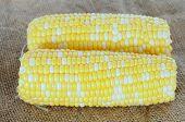 pic of sweet-corn  - fresh sweet corn display at market place - JPG