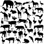 picture of zoo  - Set  silhouettes  animals and birds in the zoo collection - JPG