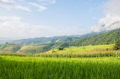 picture of shacks  - Corn and rice field terrace and shack with mountain background at Maejam Chiangmai Thailand - JPG