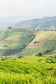 stock photo of shacks  - beautiful green rice field terrace and shack with mountain background at Maejam Chiangmai Thailand - JPG