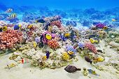 pic of fish  - Wonderful and beautiful underwater world with corals and tropical fish - JPG