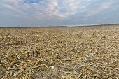 picture of threshing  - Stubble field after corn - JPG