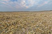 foto of biogas  - Stubble field after corn - JPG