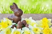 stock photo of daffodils  - Easter background chocolate bunny chocolate eggs daffodils on wooden background - JPG