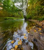 stock photo of marshlands  - Beautiful landscape with wild river in autumnal forest - JPG