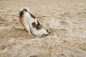 picture of shame  - dog head in sand beach like ostrich shame and fear - JPG
