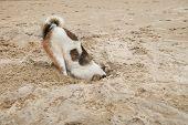 pic of shame  - dog head in sand beach like ostrich shame and fear - JPG