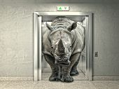 picture of rhino  - classic elevator and wild rhino - JPG