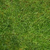 picture of fragmentation  - Green grass fragment as a background texture - JPG