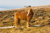 picture of iceland farm  - Beauty local Icelandic horse locate in southern Iceland - JPG