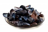 stock photo of mollusca  - Shells of mussels on glass plate - JPG