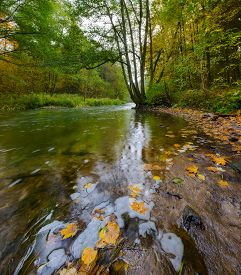 image of marshlands  - Beautiful landscape with wild river in autumnal forest - JPG