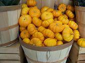 Mini Pumpkin Squash