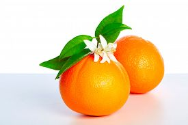 image of valencia-orange  - Oranges with orange blossom flowers in spring on white background - JPG