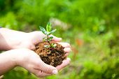 Female Hands Holding Young Plant In Hands Against Spring Green Background. Ecology Concept. Earth Da poster