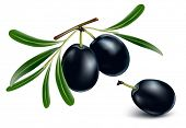 black olives with leaves on white background