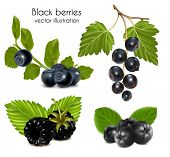 Photo-realistic vector illustration. Set of black berries with leaves.