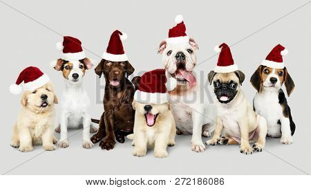 Group of puppies wearing Christmas