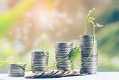 Plant Growing In Savings Coins - Investment And Interest Concept For Finance And Banking, Saving Mon poster