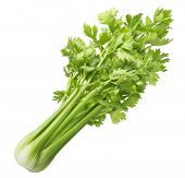 Fresh Celery Isolated On White Background. Package Design Element With Clipping Path poster