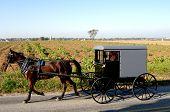 Amish Beförderung