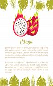 Pitaya Or Pitahaya Exotic Juicy Fruit Vector Poster With Text Sample And Palm Leaves. Tropical Edibl poster