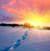 landscape with snow-path in steppe on sunset background