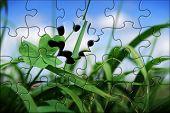 Four Leaf Clover In Grass Jigsaw
