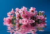 pink flowers are reflected in the water