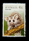 AUSTRALIA - CIRCA 1990s: A stamp printed in Australia shows image of a Greater Glider , series, circ
