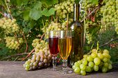 Two Glasses Of Red And White Wine And A Bunch Of Grapes On Old Wooden Table Against Vineyard.. poster