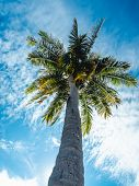 Low Angle View Of High Coconut Tree And The Bright Sunlight In The Daytime, The Sunray Shining. poster