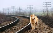 foto of stray dog  - Waiting Lonely Dog - JPG