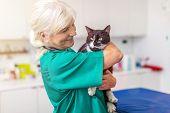 Veterinarian examining a cat in vets surgery poster
