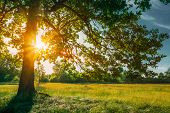 Beautiful Sunset Sunrise Sun Shining Through Oak Tree Branches  In Sunny Summer Park. Sunlight Sunra poster