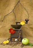 Coffee Mill With Beans An Apple And A Rose
