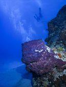 Barrel sea sponge and scuba divers