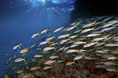 Skittish School Of Fish