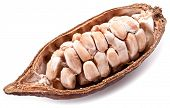 stock photo of bean-pod  - Open cocoa pod on a white background - JPG