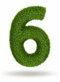 Natural grass number 6