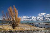 Autumn colors and fresh snow on Lake Pukaki, New Zealand