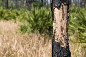 Burnt Bark