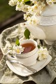 foto of jasmine  - Cup of jasmine tea and jasmine flowers - JPG