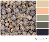 A closeup background texture dried French Puy lentils,  in a colour palette with complimentary colou