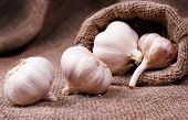 Fragrant Garlic On Background Of Coarse Cloth