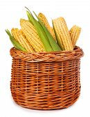 Ripe Corn In A Basket Isolated On A White Background